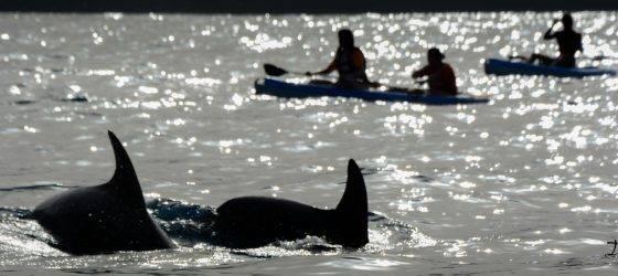 Delfines y kayaks