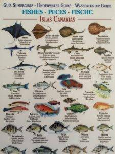 Carte identification poisson