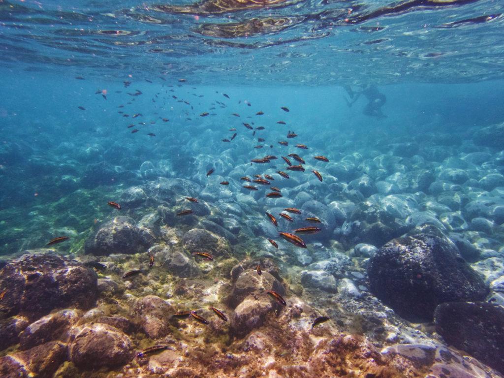 Vue sous marine à tenerife